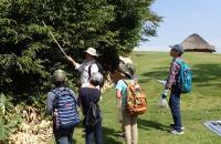 八幡山遺跡での木の実採集